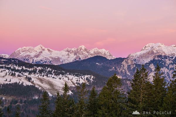 The Kamnik Alps against the pink sky before the sunrise - taken from Kranjska Reber