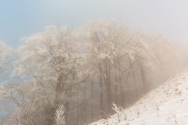 Trees in fog below the top of Kamniški vrh