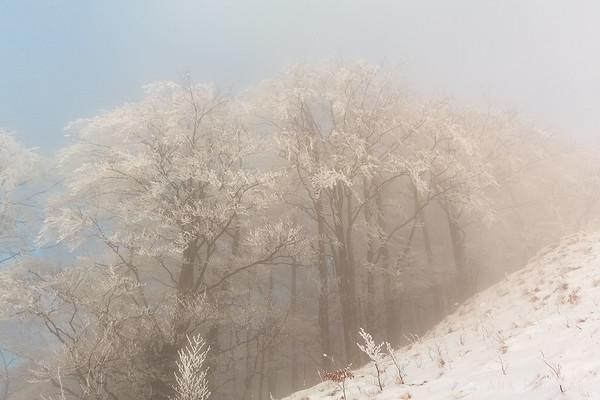 Trees in fog below the top of Kamniški vrh