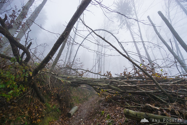 Late afternoon hike to Špica hill above Kamnik and above the fog