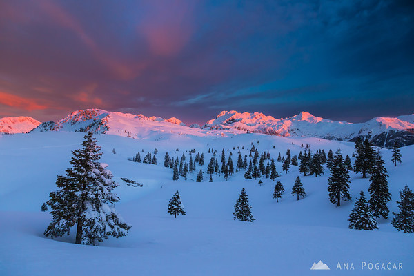 Pink sky above the Kamnik Alps before sunrise from Velika planina