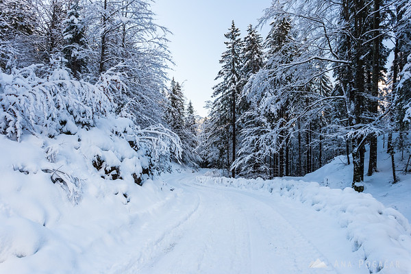 The road from Kranjski Rak was snowy