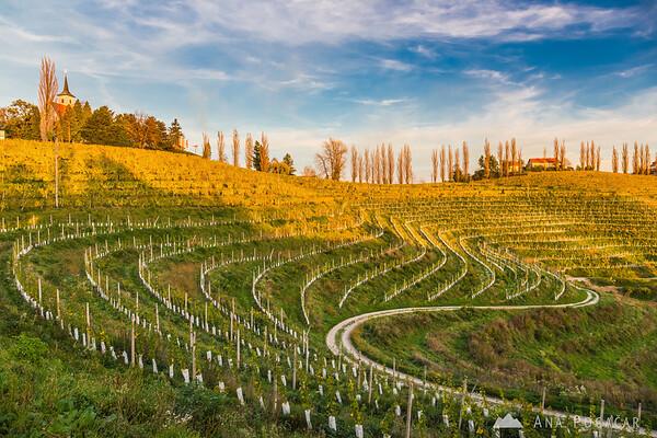 Vineyards around Jeruzalem and Svetinje