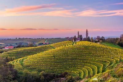 Vineyards at Jeruzalem and Svetinje - Oct 19, 2014