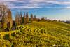 Vineyards around Svetinje and Jeruzalem