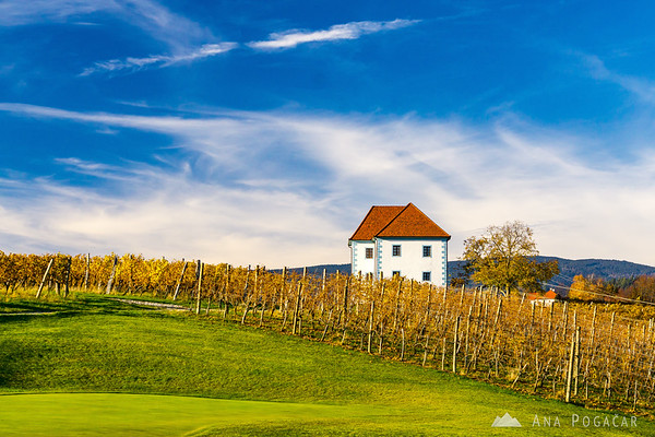 Fall colors in the vineyards of Zlati grič near Slovenske Konjice on a warm November day