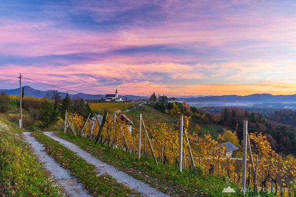 Sunset in the vineyards of Prihova, a village near Slovenske Konjice