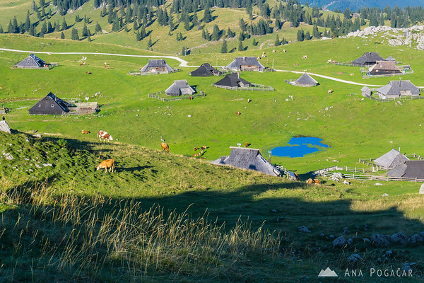 Velika planina in late afternoon