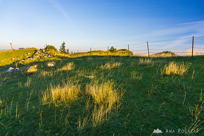 Backlit grass on Velika planina in late afternoon
