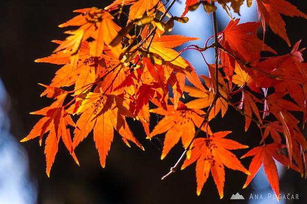 Fall colors in Kamnik