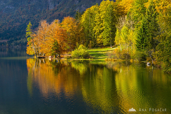 Lake Bohinj in late afternoon light