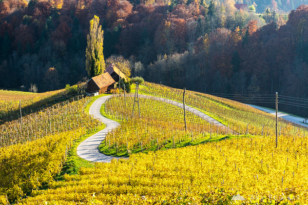 Heart in the Vineyard, Slovenske gorice region