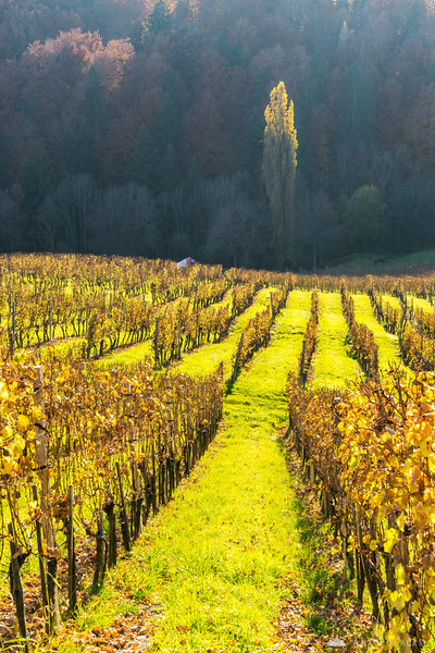 Around Heart in the Vineyard, Slovenske gorice region