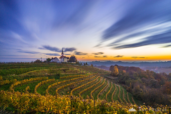 Sunset in the vineyards of Jeruzalem/Svetinje, Slovenske gorice region