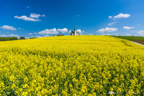 Church and rapeseed fields, Kozjansko
