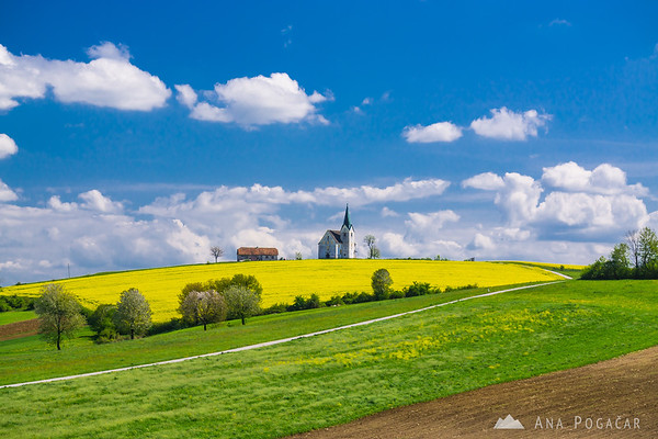 Ahh, rapeseed fields! And a church, of course. In Kozjansko.