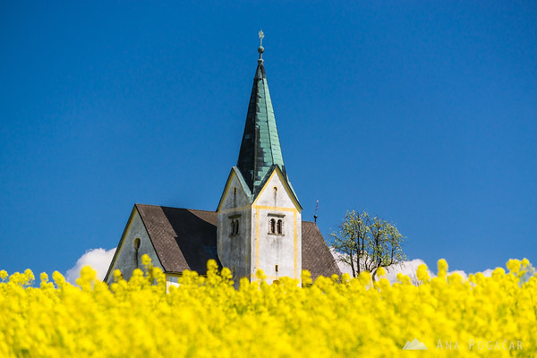 Church and rapeseed fields, Kozjansko