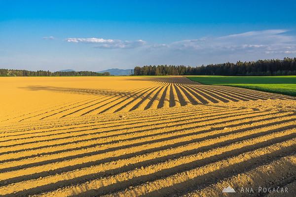 Fields around Cerklje