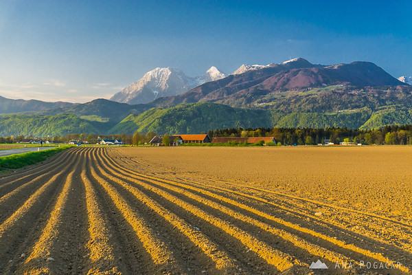 Fields around Cerklje, with the Kamnik Alps in the background