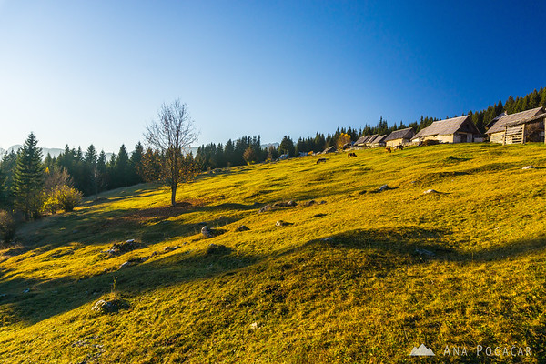Zajamniki on the Pokljuka plateau, in late afternoon light