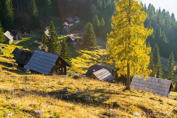 Zajamniki on the Pokljuka plateau, in late afternoon light