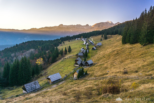 Zajamniki on the Pokljuka plateau, at sunset. Mt. Triglav in the background.