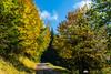 In the forests above Kranjska Gora