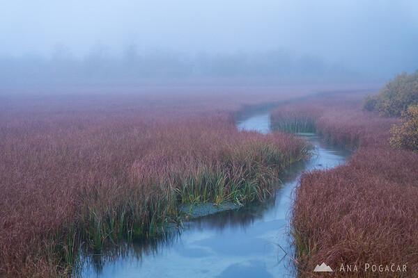 Zelenci in fog at dawn