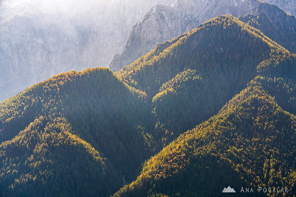 Views from the forests above Kranjska Gora