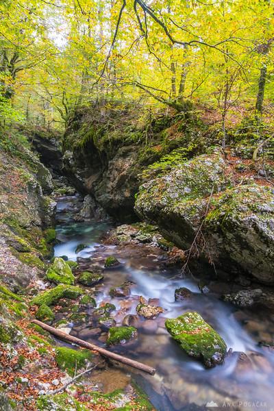Mostnica river gorge