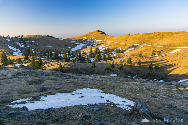 Velika planina in the morning light