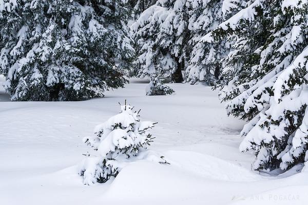 Rogla in winter