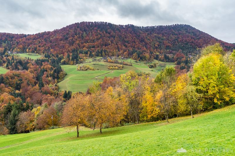 Fall colors around Trojane