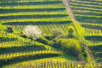 An afternoon in Goriška Brda - Apr 7, 2016