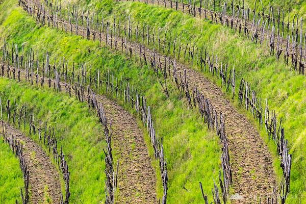 Vineyards in Goriška Brda, near Šmartno