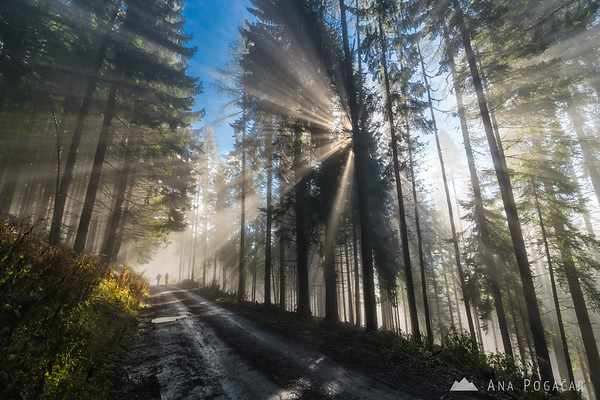Sunbeams in the forests above Kranjska Gora