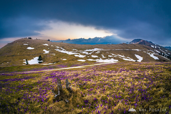 Moody sunset on crocus-clad Velika planina