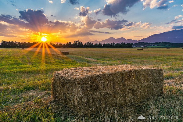 Hay bales in fields near Kamnik at sunset