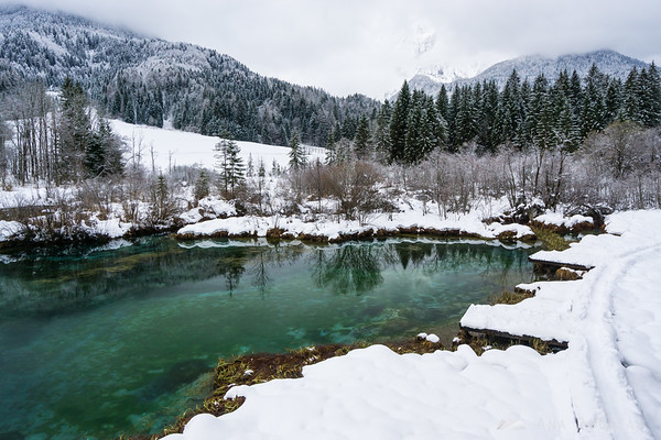 Zelenci, the source of Sava Dolinka river