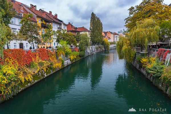 Fall colors along the Ljubljanica River in Ljubljana