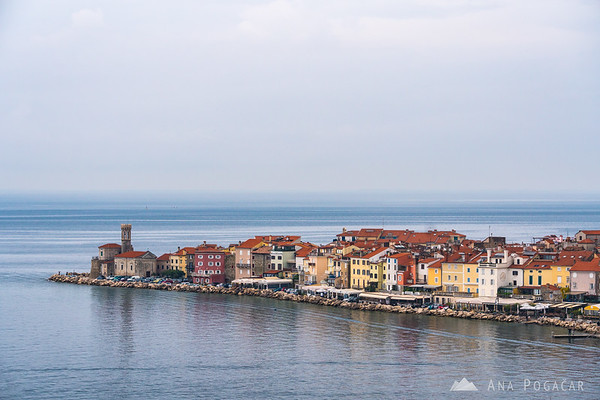 Piran from Oljčna pot