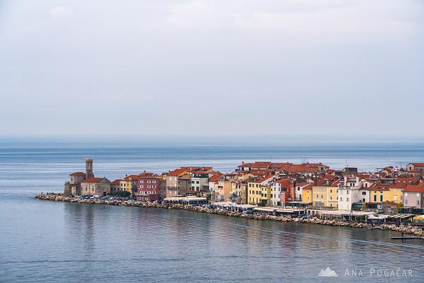 Piran from Oljčna pot