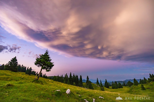 Mammatus clouds above Velika planina after sunset