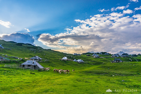 Shepherds' huts on Velika planina