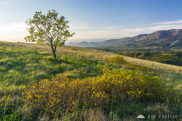Sunny pastures above Branik in late afternoon light