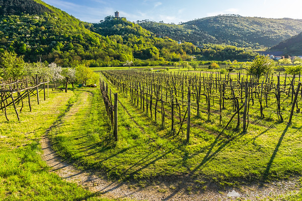 Vineyards and Rihemberk Castle above Branik