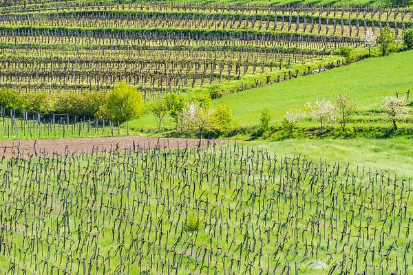 Vineyards near Goče, Vipavska