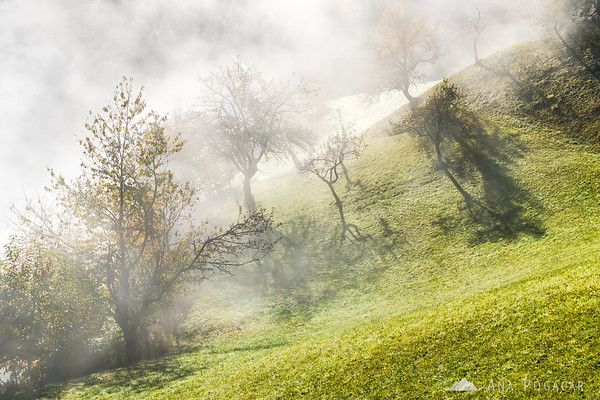 Misty morning in the hills above Škofja Loka
