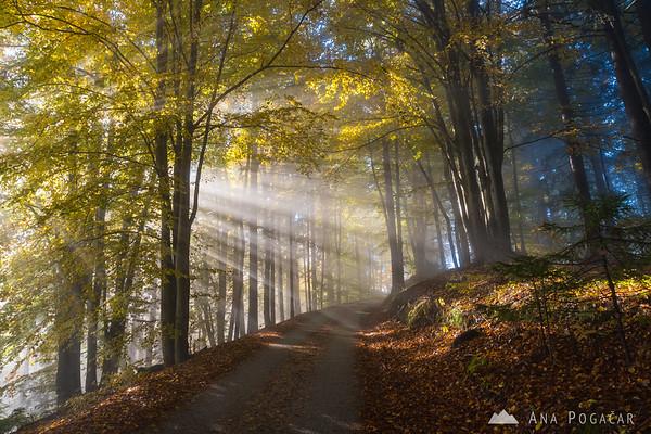 Sun beams in a forest above Škofja Loka
