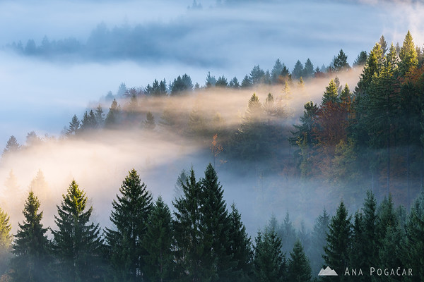 Morning mists envelop the forest in fall colors